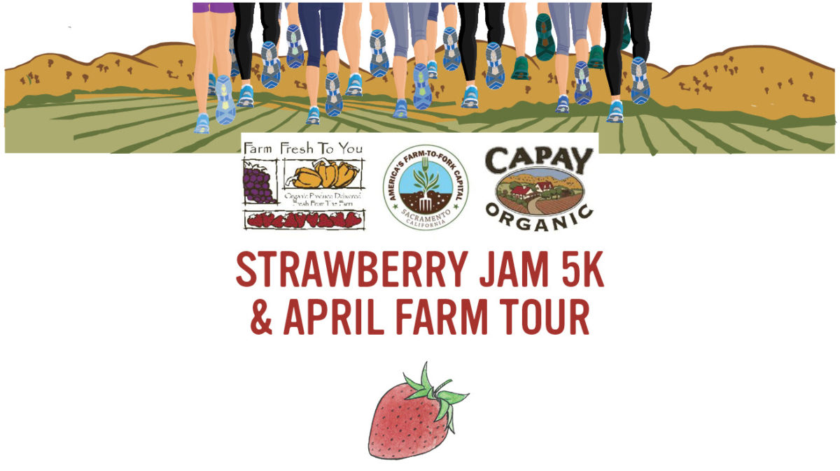 Road Trips: Strawberry Jam 5K in Capay